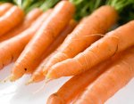 Karottensaison: Juni bis September