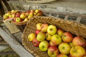Äpfel (Quelle: BMLFUW/Rita Newman)